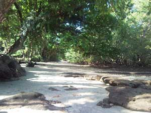 A shady sandy beach, ideal place of stay during the midday heat